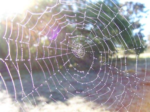 dewy_spider_web.jpg
